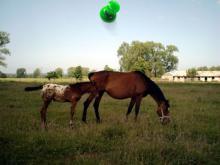 Wolin, czerwiec 2003 - Stadnina koni w Ładzinie
