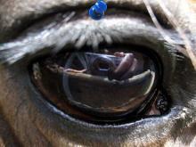 Edukacyjna wymiana - Brzóza 2006 - W oku konia